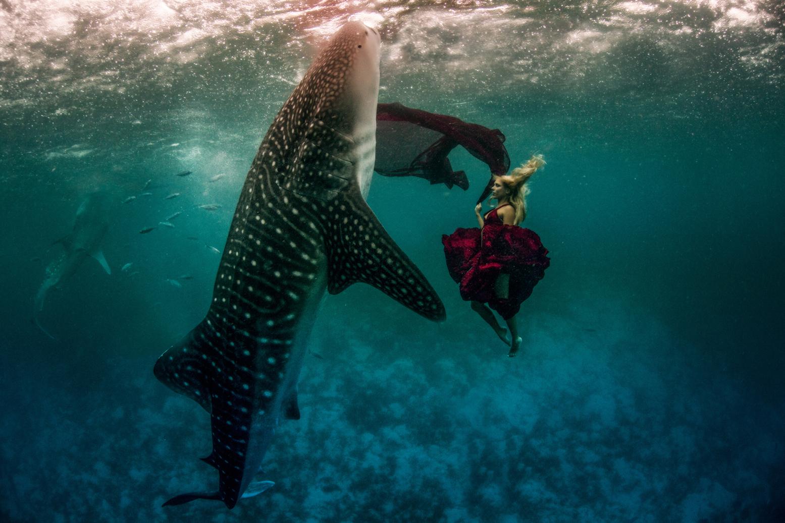 Whale Shark Series 1