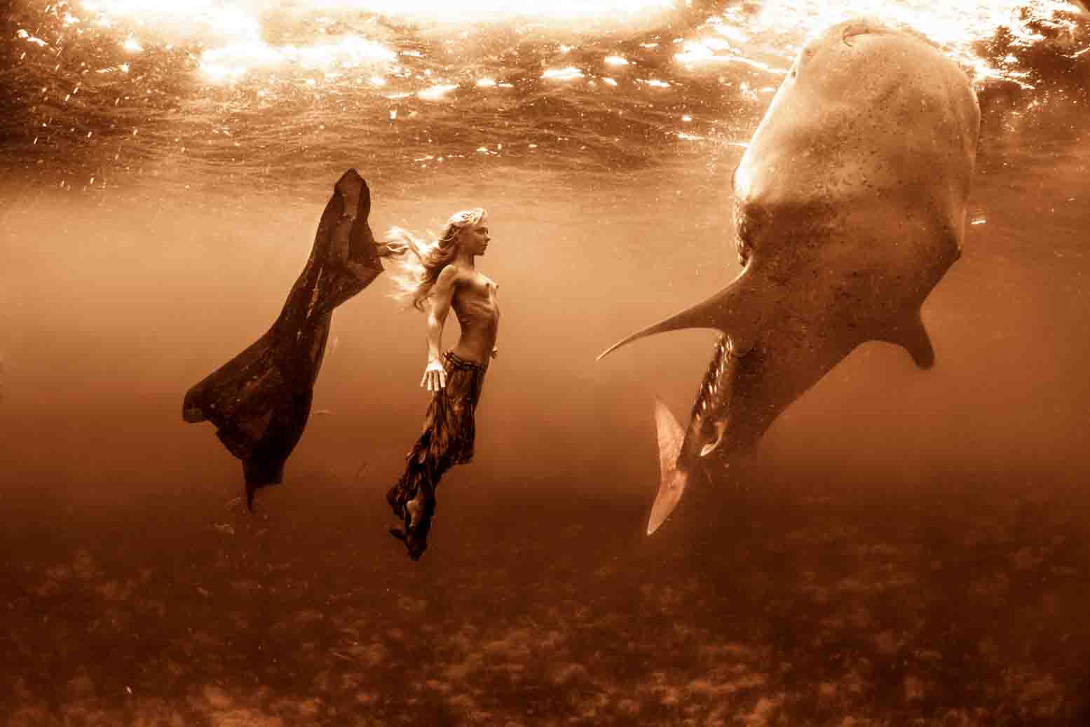 Whale Shark series 3